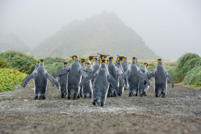 macquarie-island-2