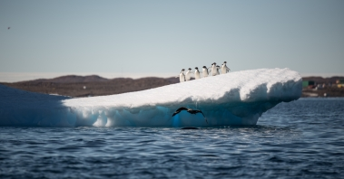 This photo has everything - penguins, a leopard seal, a skua, Davis Station and even a blurred image of a helicopter in the left corner